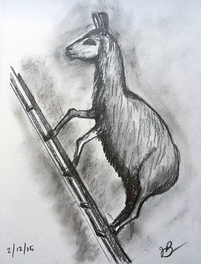 L = Llama On A Ladder
