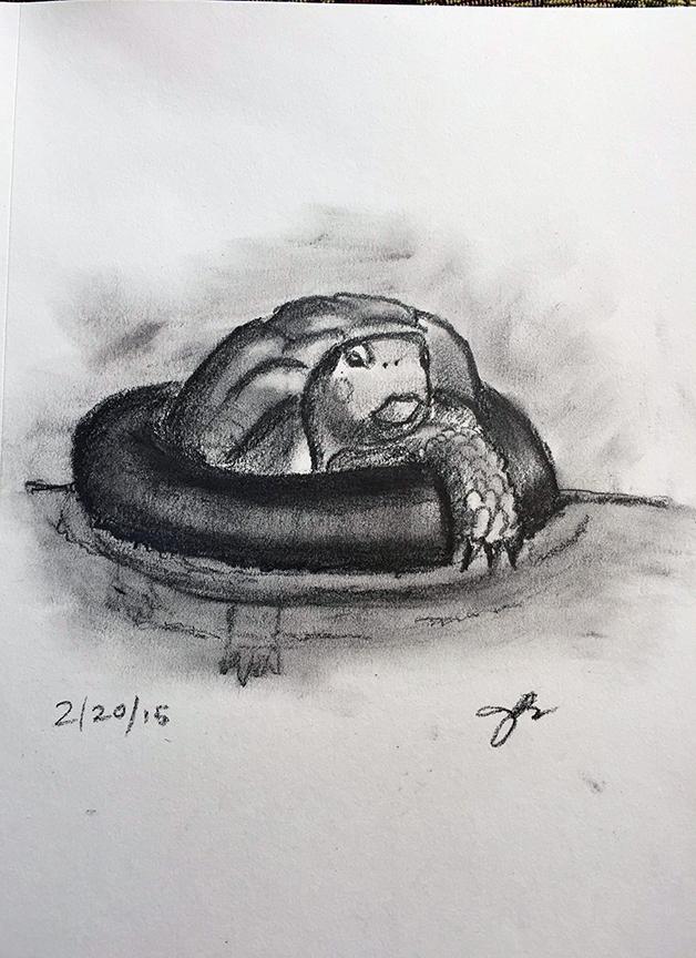T = Turtle Tubing