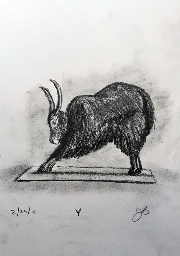 Y = Yak Doing Yoga